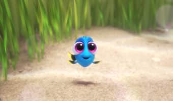 Meet Baby Dory from Finding Dory! #HaveYouSeenHer